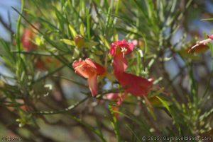 Wildflowers grow everywhere and anywhere