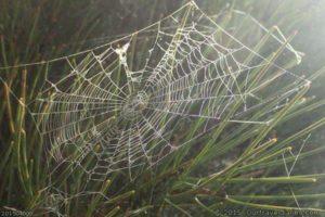 Spider Web Near Emu Rocks Hyden WA