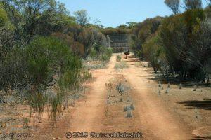 Emus at Beehive Tank