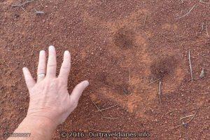 Hmm, must be a big Emu, Waltumba Camping Area, Lake Gairdner, South Australia