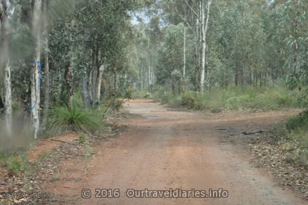 Tracks around Mount Dale, Darling Range, WA