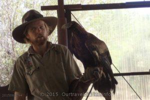 Park Ranger and an eagle undergoing rehab - Alice Springs Desert Park